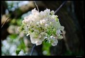 Bokehlicious flower